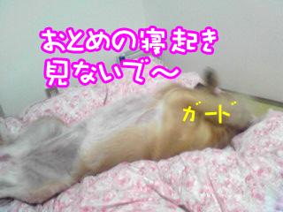 PA0_0490a.jpg