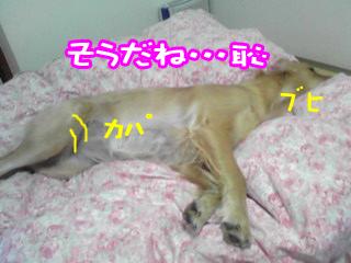 PA0_0491a.jpg