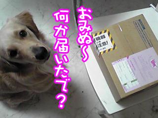 PA0_0498a.jpg