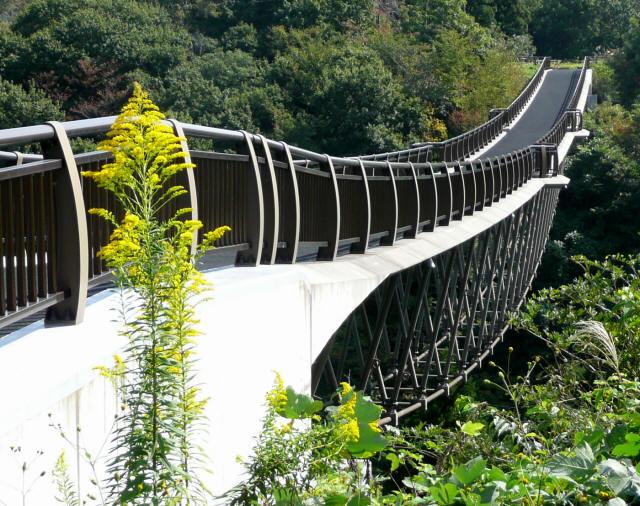 森のわくわく橋2
