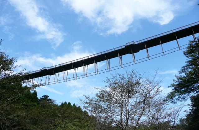 森のわくわく橋5