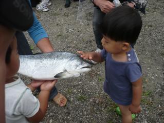 鮭にチュウ