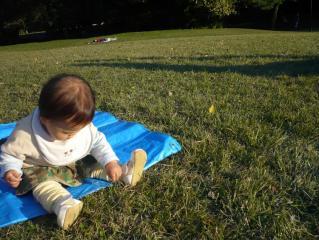 芝生をむしる。。。