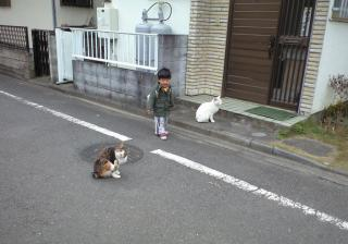 ネコが好き