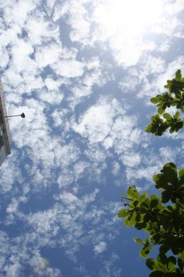 空がきれいだねぇ。