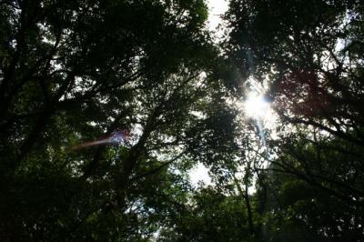 木漏れ日がキレイね。