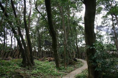 森の中です。