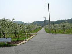道の両脇がりんご畑