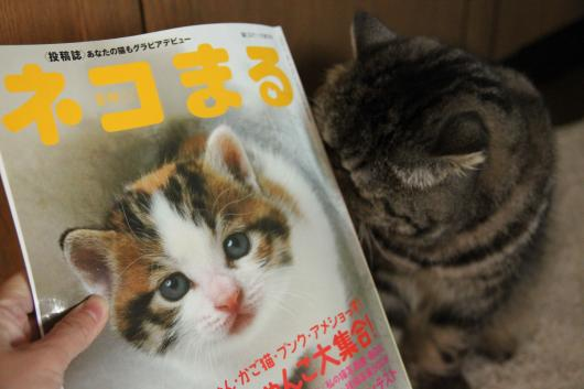 ネコまる1