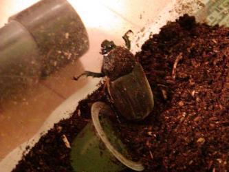 beetle 090320c