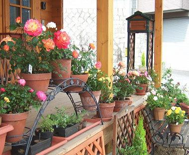 デッキの花