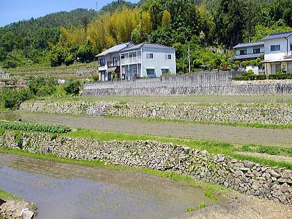 2007年田植え
