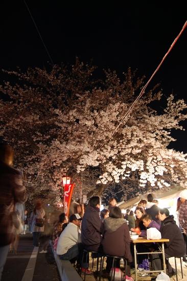01桜屋台