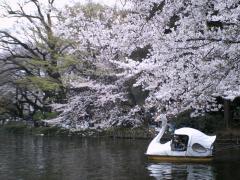 inokashira01.jpg