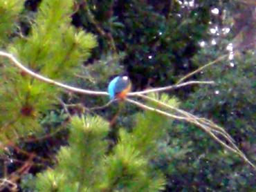 キレイな鳥さん
