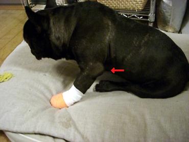 2009-04-08 肘の腫れ