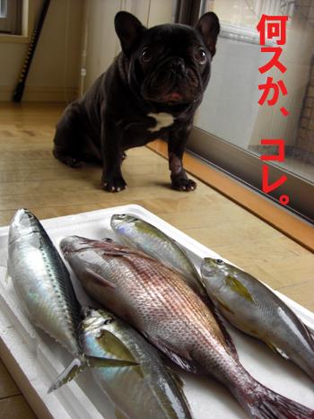 2009-05-30 大漁2