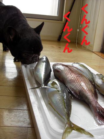 2009-05-30 大漁3