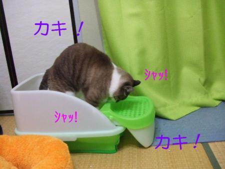 1_20090510155251.jpg