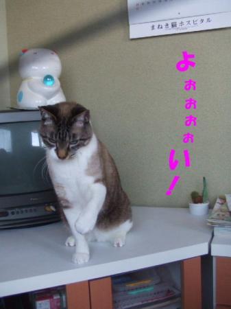 2_20090516121146.jpg
