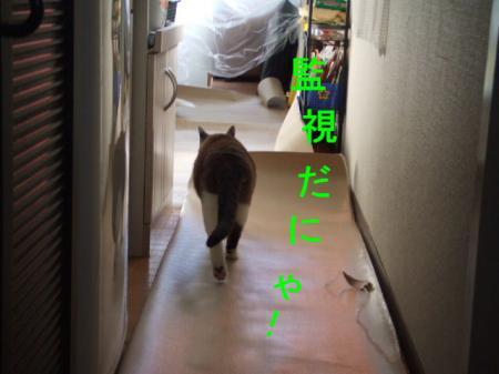 DSCF04121.jpg