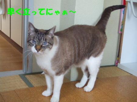 DSCF07321.jpg