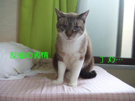 DSCF97381.jpg