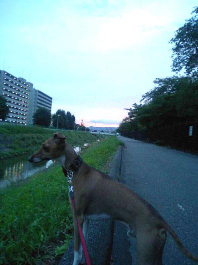 夕暮れ散歩0830#8722;1