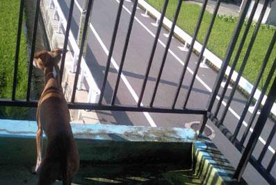 08田んぼ見張り犬2