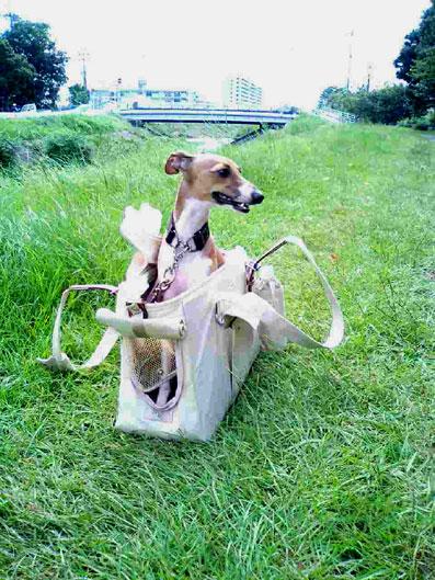 捨て犬とマイクロチップいぬ3