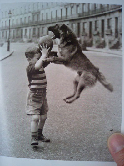 犬本ー (12)