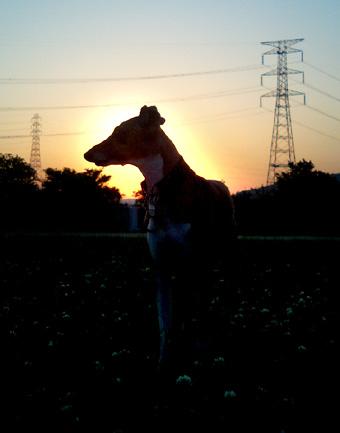 夕日散歩1