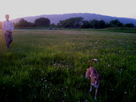 夕日散歩5