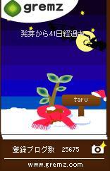 クリスマス(夜)