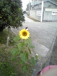 DVC00021_M_20081212180648.jpg