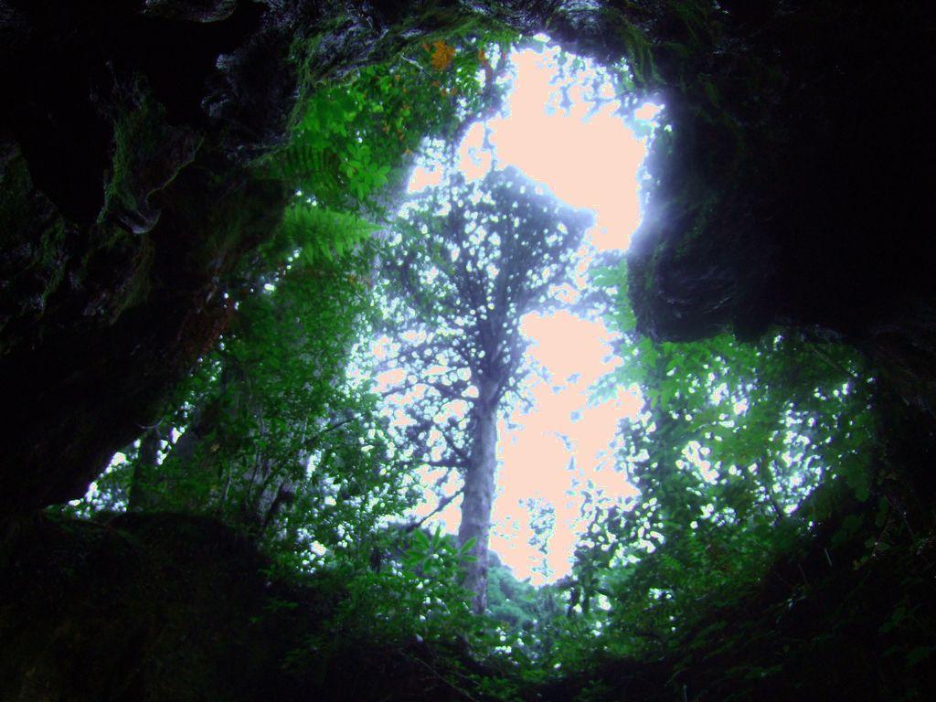 内側から見上げればなんとハート型、屋久島のウィルソン株。
