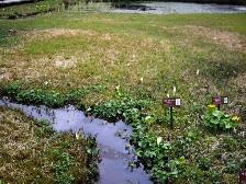 湿生花園2