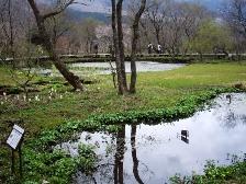 湿生花園3
