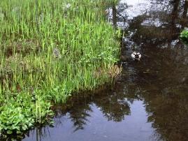 湿生花園5