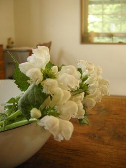 5月白い花