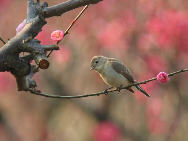 ojiro2007.2.10.16.jpg