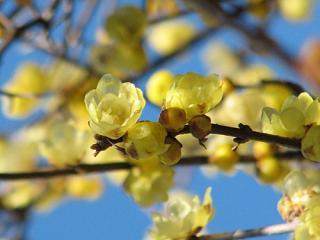 robai_2264_convert_20090210085402.jpg