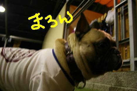 2008100512.jpg
