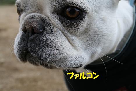 2009011154.jpg
