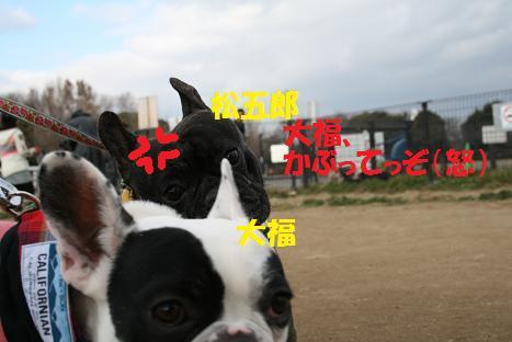 2009011156.jpg