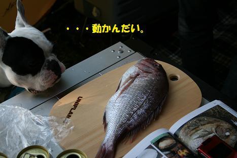 2009061549.jpg