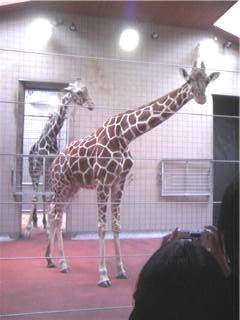 動物園4.jpg