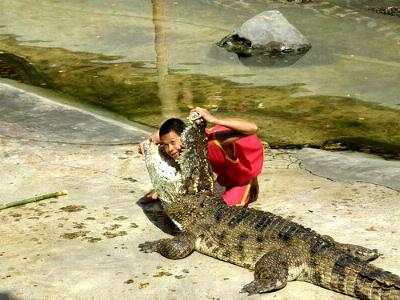 croc-show9.jpg