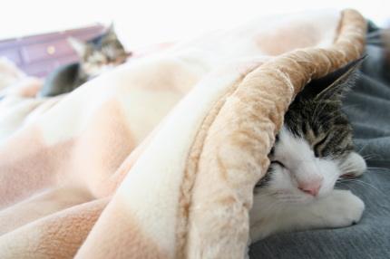 猫付き昼寝