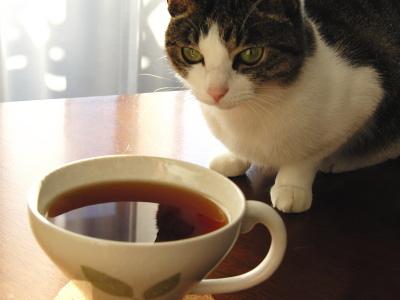 紅茶とちび